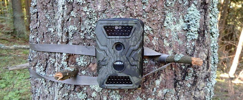 generica fototrappola legata con cinghia ad un albero