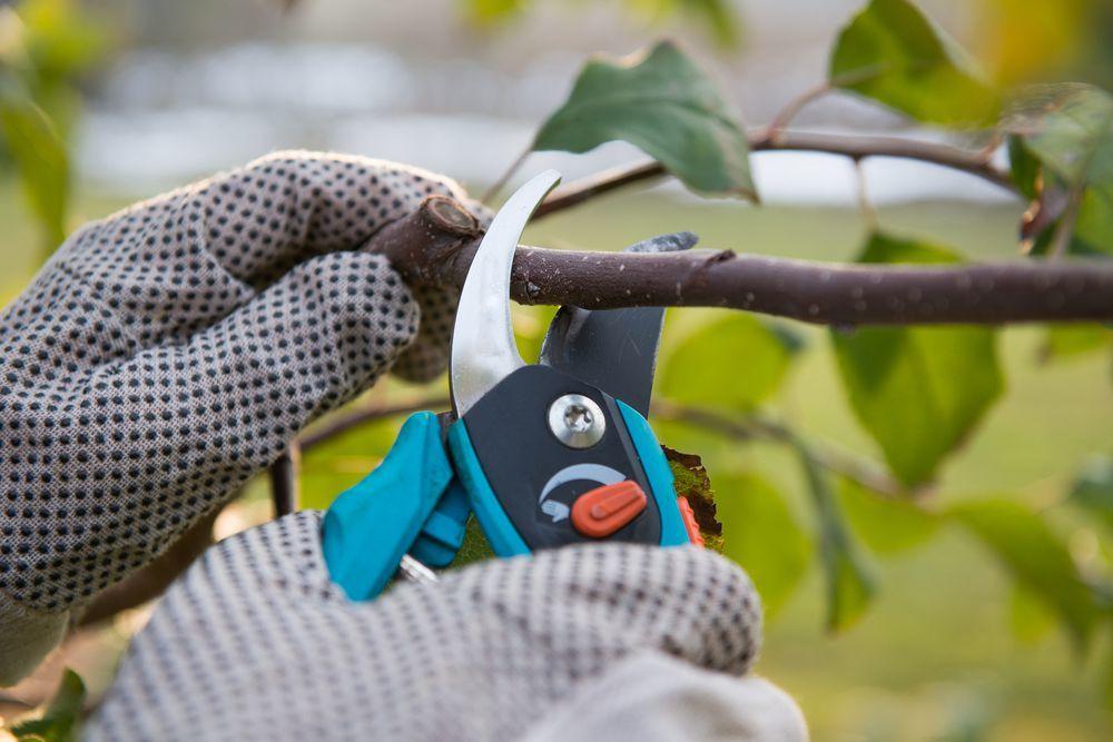 giardiniere mentre pota un ramo con una forbice da potatura elettrica