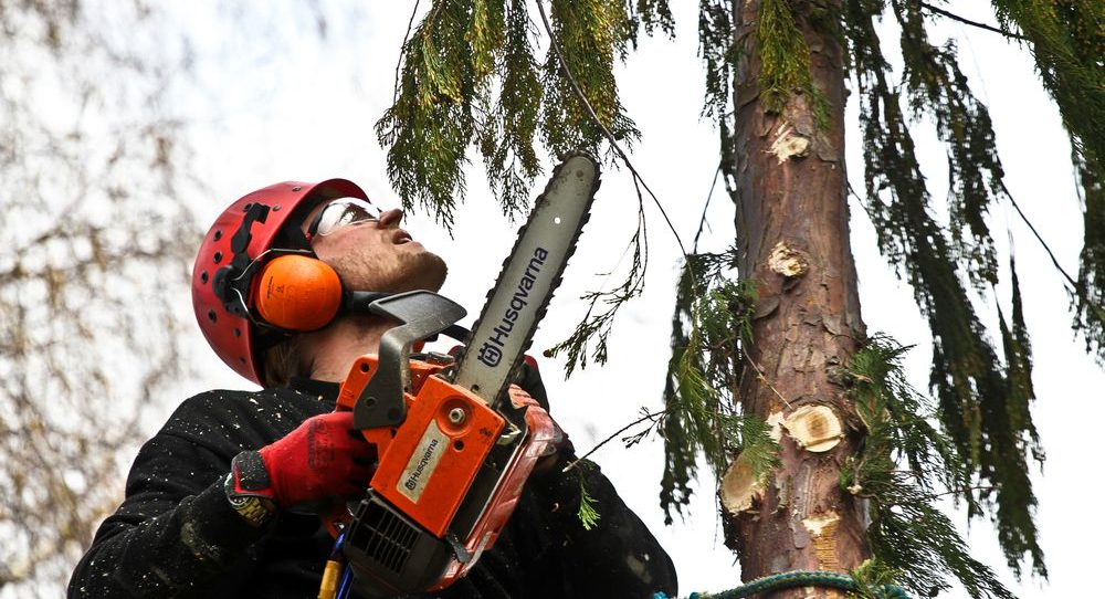 operaio mentre pota un albero con motosega